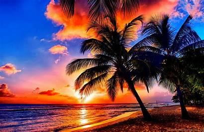 Tropical Sunrise Scenery Nature Desktop Beaches Palms