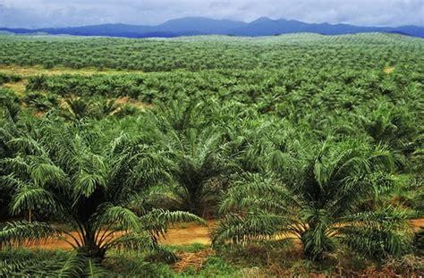 tele matin cuisine j ai testé pour vous arrêter l huile de palme