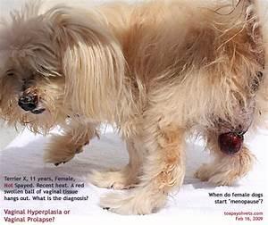 031208ASingapore Toa Payoh veterinary vets dog cat rabbits ...