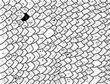 Fish Coloring Scales Dragon Fondo Concurso Comu Oficial Seamless Soft Pencils sketch template