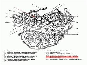 Wiring Diagram Database  2000 Buick Lesabre Serpentine