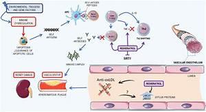 Summary Of The Pathogenesis Of Systemic Lupus