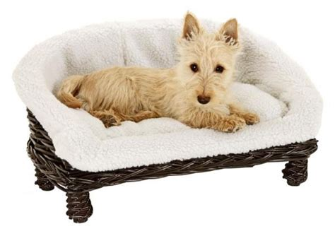 canapé chien photos canapé pour chien