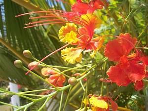 Baum Mit Langen Schoten : sch nheiten aus dem garten eden zierpflanzen in der ~ Lizthompson.info Haus und Dekorationen