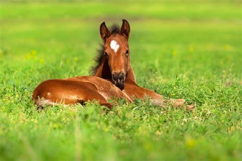 vitamin   key  maintaining foal health horse