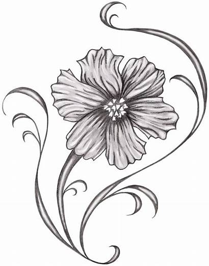 Cosmos Birth Flowers Month Flower Tattoo October