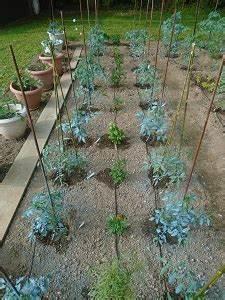 Arrosage Des Tomates : installer un syst me d 39 arrosage des tomates que du temps ~ Carolinahurricanesstore.com Idées de Décoration