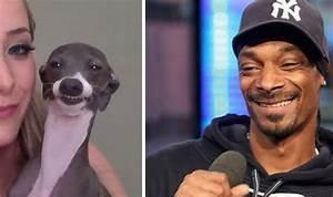 16 Animals That Look Like Celebrities