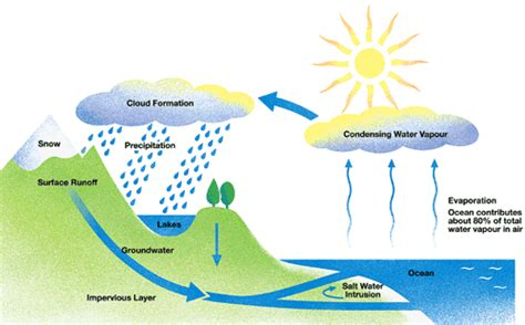 sawater  water cycle