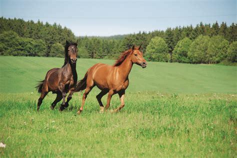 Muskelaufbau Pferd Futter