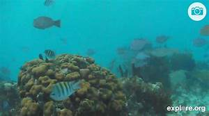 live feed ocean floor cameras blitz blog With ocean floor camera live stream