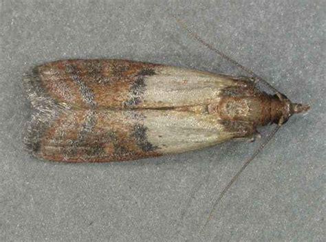 pest info sound shore pest control