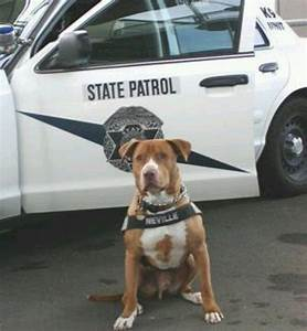 Pit Bull Joins NY Police Force K9!