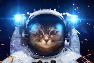 cat astronaut cat images for laugh humorous hd wallpaper pixhome
