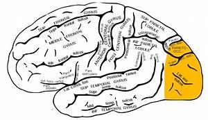 Occipital Lobe Seizure