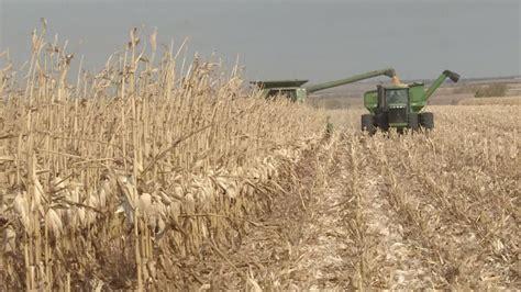 USDA predicts slightly smaller Kansas corn harvest