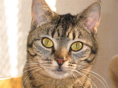 Search For Katz das leben mit einer katze nach utation einer gliedmasse