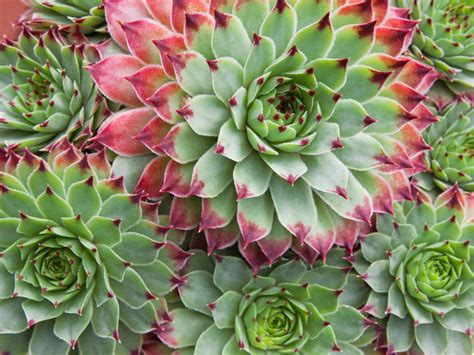images succulents how to grow succulents from clippings ebay