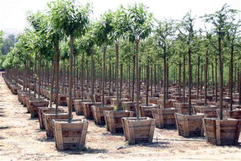Anleitungen Im Bereich Garten Zum Thema Baumpflege