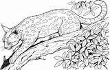 Leopard Coloring Pages Animals Wildlife Adult Colour Print Adults Realistic Cat Cats Treed sketch template