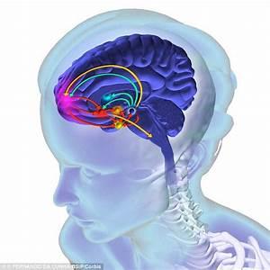 Neuroscientist believe we soon could IMPLANT memories of ...