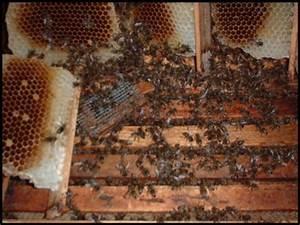Bienen Vertreiben Essig : imkern von anfang an teil 18 notbehandlung am bienenvolk mit milchs ure auch f r anf nger ~ Whattoseeinmadrid.com Haus und Dekorationen