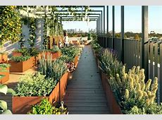 Rooftop garden ABC News Australian Broadcasting