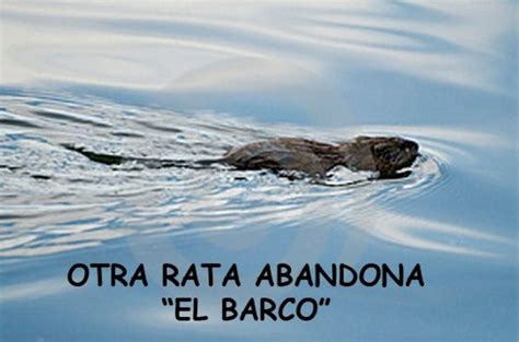 Imagenes De Barcos Con Frases by Imagenes Con La Frase Otra Rata Abandona El Barco