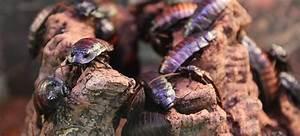 Produit Contre Cafard : produits contre les blattes pour une d sinsectisation ~ Melissatoandfro.com Idées de Décoration
