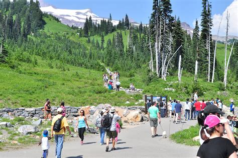 File:Mount Rainier - Paradise, August 2014 - start of the ...