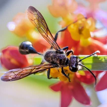 verbotene mittel gegen maulwurf fliegende ameisen bek 228 mpfen hausmittel vorbeugungstipps