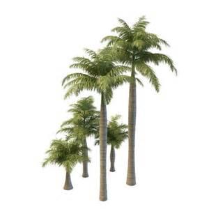 royal palm trees 3d model 3ds max files free modeling 29995 on cadnav
