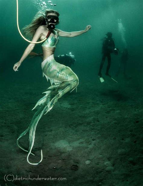 whimsical wonderland  gallery  underwater models