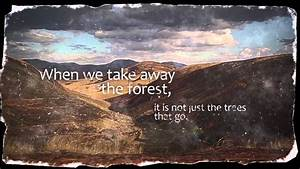 Forests Are The Lungs Of The Earth