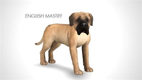 improved english mastiff neapolitan mastiff cane corso