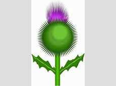 Scottish thistle free vector download 29 Free vector for