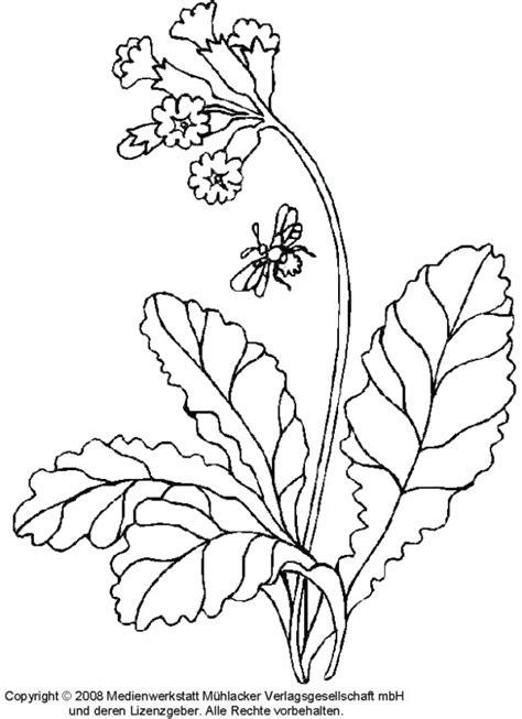 ausmalbilder fruehlingsblumen kostenlos malvorlagen zum