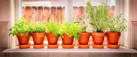 Window Potted Plants by Grow Edible Plants Indoors For A Year Garden