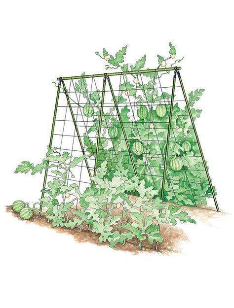 A Frame Garden Trellis by Trellis For Cucumbers And Squash Garden