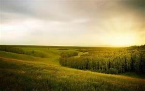 Landscape, Forest, Open, Space, U00b7, Free, Photo, On, Pixabay