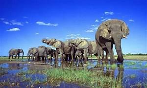 'Noah's Ark' shipment of Namibian wild animals to Cuba ...
