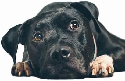 Poison Animal Help Pet Dog Control Center