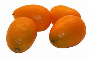Wie Isst Man Grapefruit : kumquat ~ Eleganceandgraceweddings.com Haus und Dekorationen