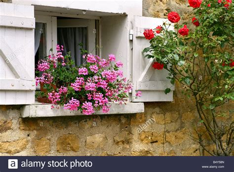 Flowers For Windowsill by Flowers On Windowsill Up Stock Photo Royalty Free