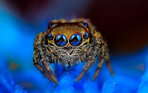 eye   spider hypnotizing macro   exotic