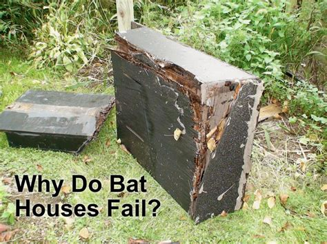why do some bat houses fail bat conservation and