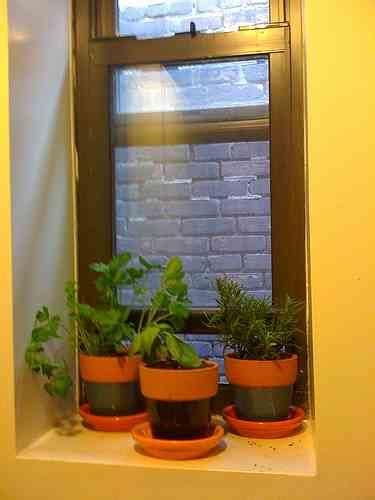 green kitchen growing  windowsill herb garden