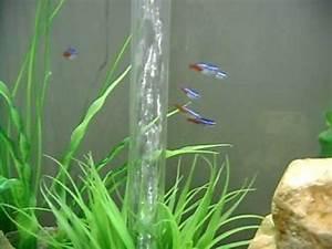 Biorb Life 60 Aquarium with Neon Tetra and Danio