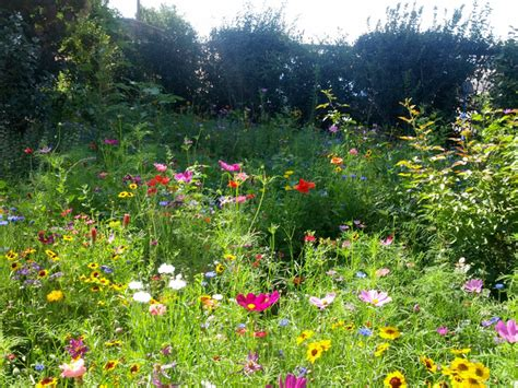 cour de cuisine gratuit jardin sauvage graminées et sauge jardin sauvage