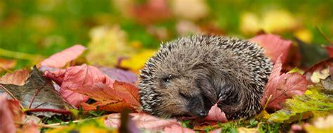 Igel Im Garten Herbst by Garten Winterfest Machen Mit Einfachen Tipps Und Tricks